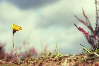 flower-815301_960_720 (1)