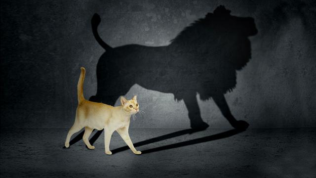 14-11-11-miriam-ashkenazi-illusion-versus-reality